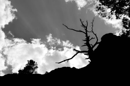 Silhouette of withered tree in the background sky and clouds Stock Photo