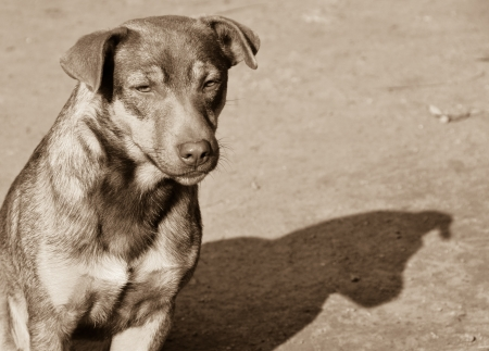 Shadow of homeless dog photo