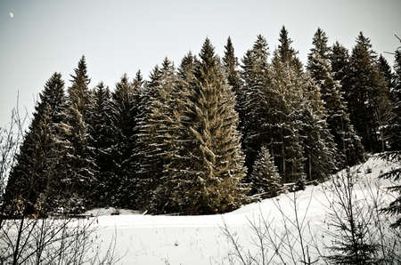 Cold snow forest Stock Photo
