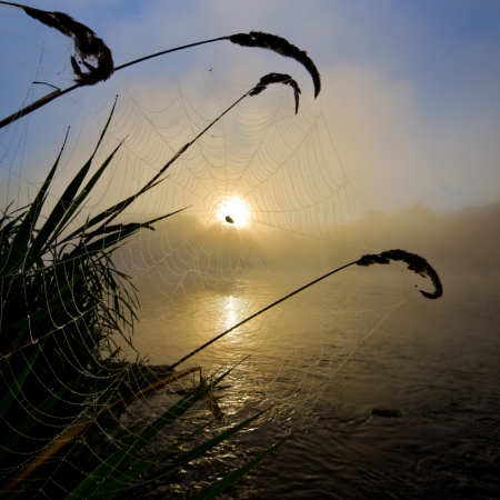 Spiderweb at colorful Foggy dawn morning on the river photo
