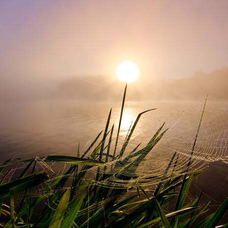water s edge: Spiderweb a colorful Foggy mattina all'alba sul fiume