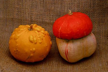 Unusual yellow pumpkin and orange hat pumpkin - autumn harvest on sackcloth jute background