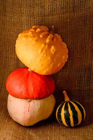 Unusual yellow pumpkin, orange hat pumpkin and watermelon - autumn harvest on sackcloth jute background Stock Photo