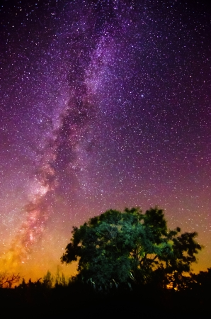 Silhouette of a tree against the background of the Milky Way and the night sky with unusual lighting Stock Photo
