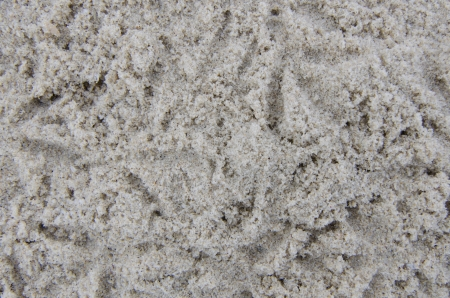 Birdprint on the sand texture background