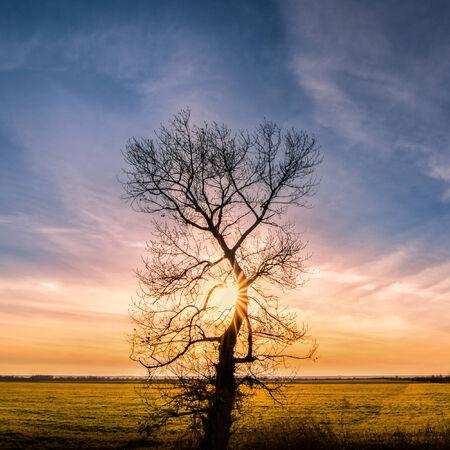 Hugging the sunset - alone tree with sun rays, green grass and blue cloudy sky photo