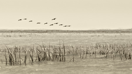 Birds flying - vintage style black  and white photo