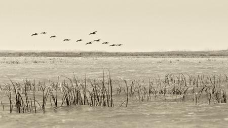 Birds flying - vintage style black  and white Stock Photo