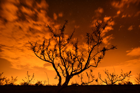 Starry night - alone tree silhouette on moving clouds stars  photo