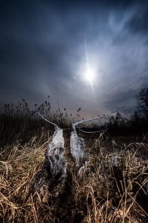Halo ray of  the moon - night full moon mystical landscape  photo
