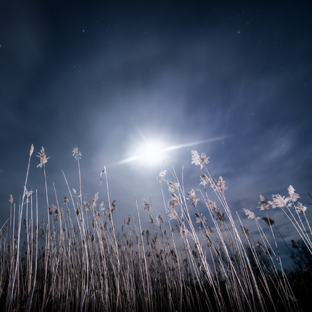 Halo ray of  the moon - night full moon mystical landscape background