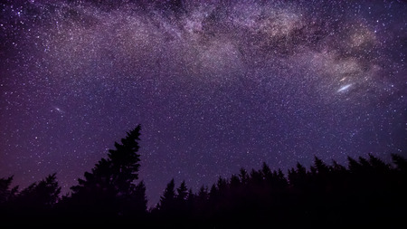 Milky Way and Sars night sky background forest silhouette Stock Photo