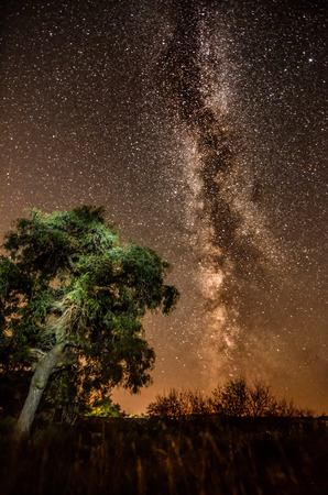 Silhouette of a tree against the of the Milky Way and the night sky with unusual lighting