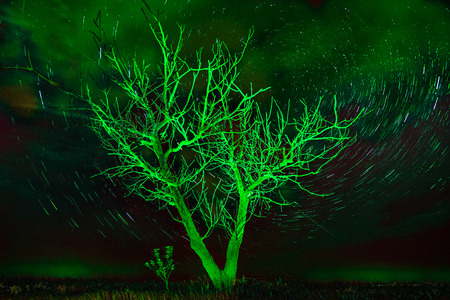 Alone tree on night sky with stars, startrails in unusual green light
