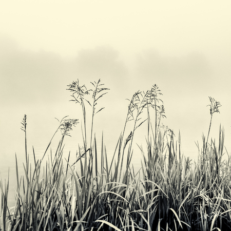 absract art: Cane silhouette on fog - minimalism concept in black and white