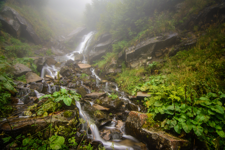 Foggy  forest waterfall background Stock Photo
