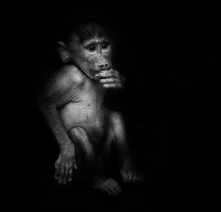 Baby orangutan monkey smiling - black  background