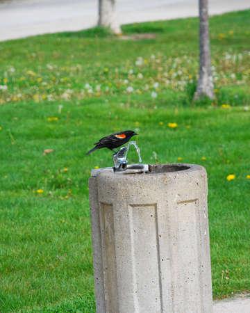 thirsty bird: Thirsty bird