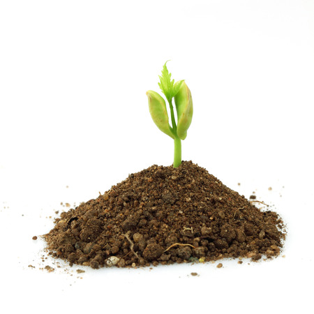 Seedling growing from soil on white  photo