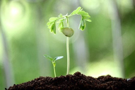 Plant growth-Baby plants photo
