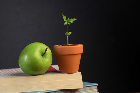 Blackboard with books,apple and plant photo