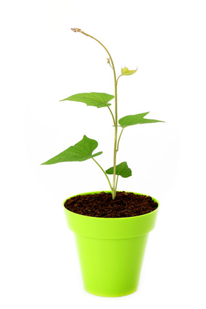 Baby plant growing in a pot-new life  photo
