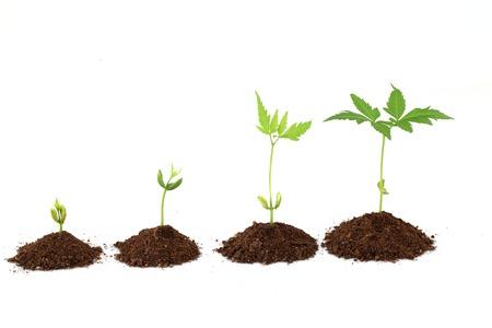 Plant stages - Plant evolution photo