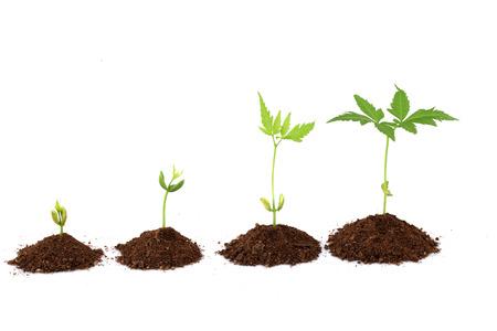 Plant groeistadia - Plant vooruitgang Stockfoto