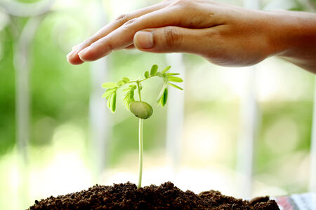 Hand protecting a baby plant  Stock Photo