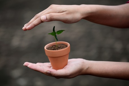 Hand protecting a baby plant photo