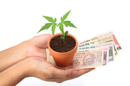 Hands holding plant with Indian currency - Growing investment photo