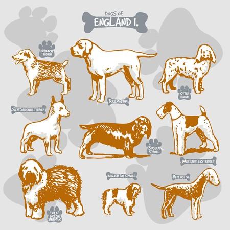 犬は、名前を持つ国によって孤立したイラストに世界ベクトル描画とシルエットの品種、イングランド1