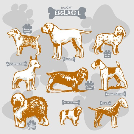 Dogs breeds of the world vector draw and shilouette on isolated illustration by countries with names, England 1