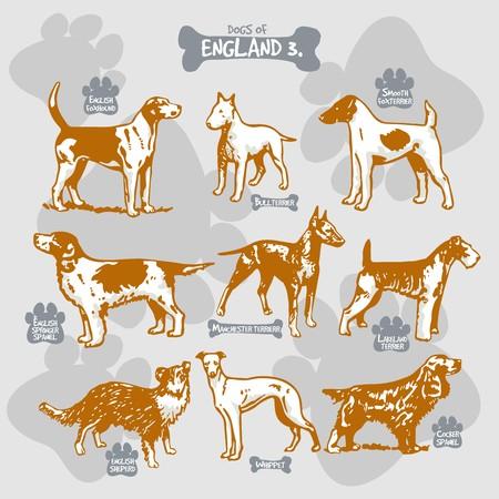 犬は、名前を持つ国によって孤立したイラストに世界ベクトル描画とシルエットの品種、イングランド3  イラスト・ベクター素材