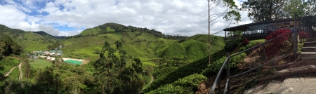 boh: Cameron Highlands