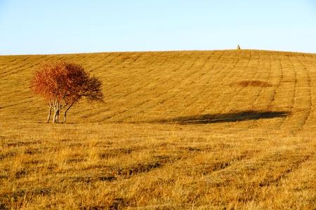 as far as the eye can see: autumn field