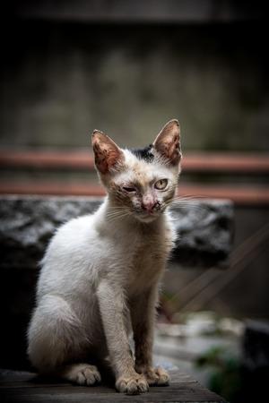 one eyed: The one eyed cat