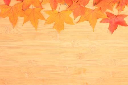 autumn maple leafs  photo