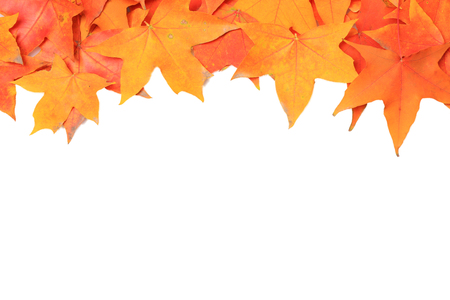 Colorful autumn maple leaves border. Isolated on white background photo