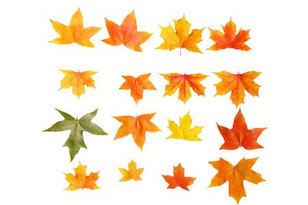 maple leafs photo