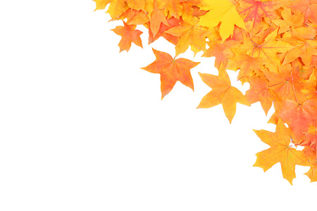 fall time: autumn maple leafs isolated on a white