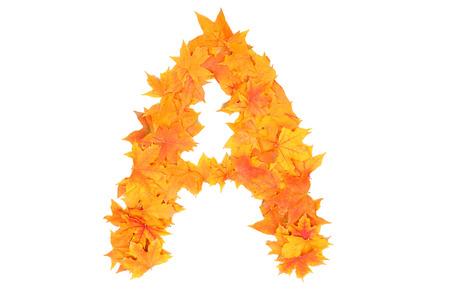 alphabet of autumn leaves photo