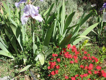 hondo: Hondo Iris Farm, Hondo New Mexico