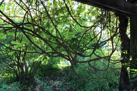 freely: Vines growing freely