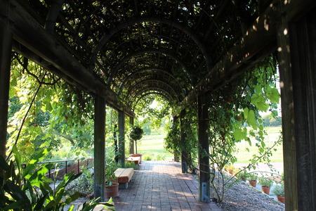 greenery: Greenery Arch Stock Photo