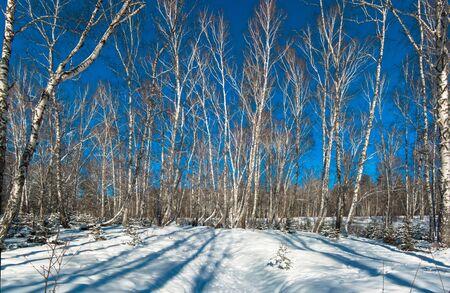underwood: Winter forest