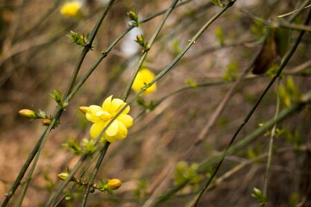 yellow: Yellow flower
