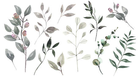 Set of watercolor leaves, herbs, branches. Botanical clipart. Floral Design elements.Collection garden and wild, forest herb, branches.Illustration isolated on white background. Banque d'images