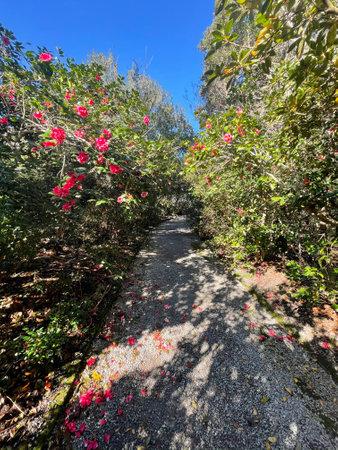 Beautiful walking path.