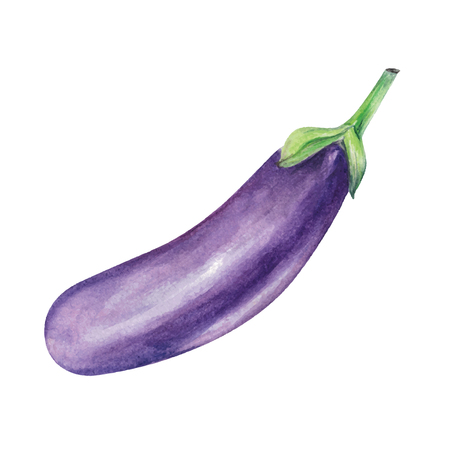 Eggplant watercolor hand drawn illustration isolated on white background.
